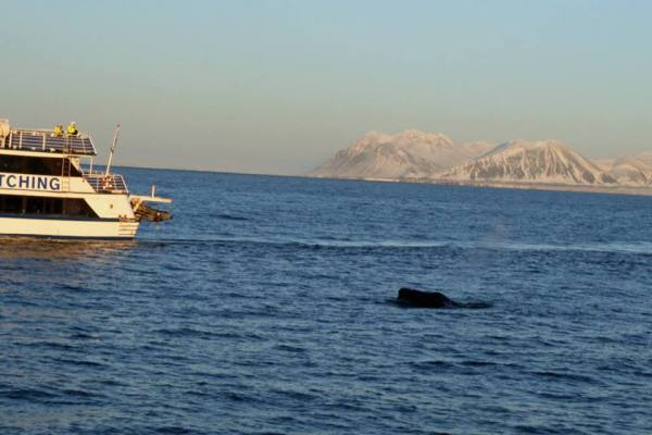It's a humpback. Promise...